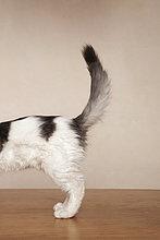 weiß,schwarz,jung,grau,Kätzchen,Katze