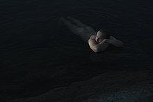Nachdenklicher nackter Mann, der sich im Wasser entspannt.
