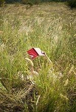 liegend, liegen, liegt, liegendes, liegender, liegende, daliegen ,Frau ,Buch ,lang, langes, langer, lange ,Gras ,Taschenbuch ,vorlesen