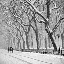Mensch ,Menschen ,gehen ,Baum ,groß, großes, großer, große, großen ,Schnee