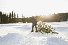 Mann ,Baum ,Weihnachten ,ziehen ,Schnee