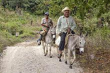 Bauern reiten auf Eseln, bei Jalcomulco, Veracruz, Mexiko