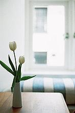 Sitzmöbel,Fenster,weiß,Kopfkissen,Blumenvase,Tulpe,Streifen,Tisch,Sitzplatz
