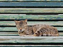 Schlafende Katze, Lissabon, Portugal, Europa