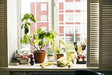 Fenster,Lebensmittel,Pflanze,Fensterbank,Topfpflanze
