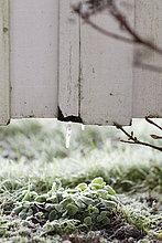 bedecken,Pflanze,Frost
