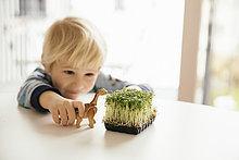 Junge - Person,klein,Spielzeug,Kresse,Tisch,Dinosaurier,spielen