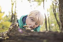 sehen,Glas,Junge - Person,klein,Wald,Aussichtsplattform