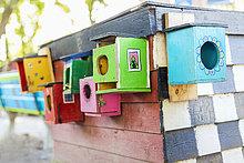 Farbaufnahme,Farbe,kleben,Wand,Gebäude,Tier,Vielfalt
