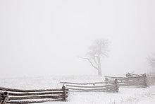 Kälte,Tag,Himmel,weiß,Boden,Fußboden,Fußböden,Schnee