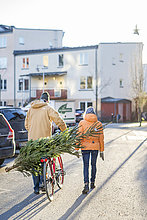 Transport,Weihnachtsbaum,Tannenbaum,reifer Erwachsene,reife Erwachsene,Rückansicht,Ansicht,Fahrrad,Rad,Södermanland