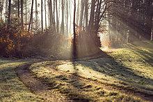 Spur,Morgen,Wald,Sonnenlicht,Österreich