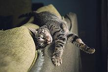 Tabby Katze entspannt auf der Couch