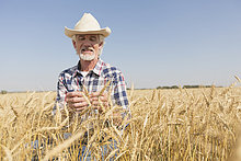 Landwirt untersucht Weizen auf dem Feld.