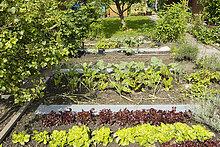 Vegetable plants growing in garden