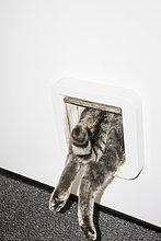 Unterer Teil der Katze, die von der weißen Tür eintritt