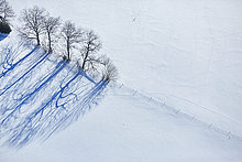 Baumreihe auf einer Weide, Baden-Württemberg, Deutschland, Europa