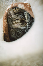 Tabby Katze schläft im Bau