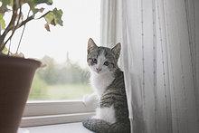 Porträt einer Katze auf der Fensterbank sitzend