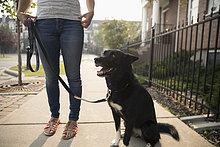 Frau stehend mit Hund an der Leine auf dem Bürgersteig